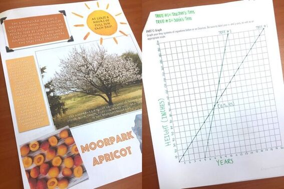 Students analyze systems of linear equations in the real world by comparing growth rates of trees.